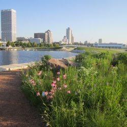 Wetland Prairie and Downtown