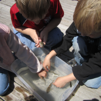 Kids Observing a Goby
